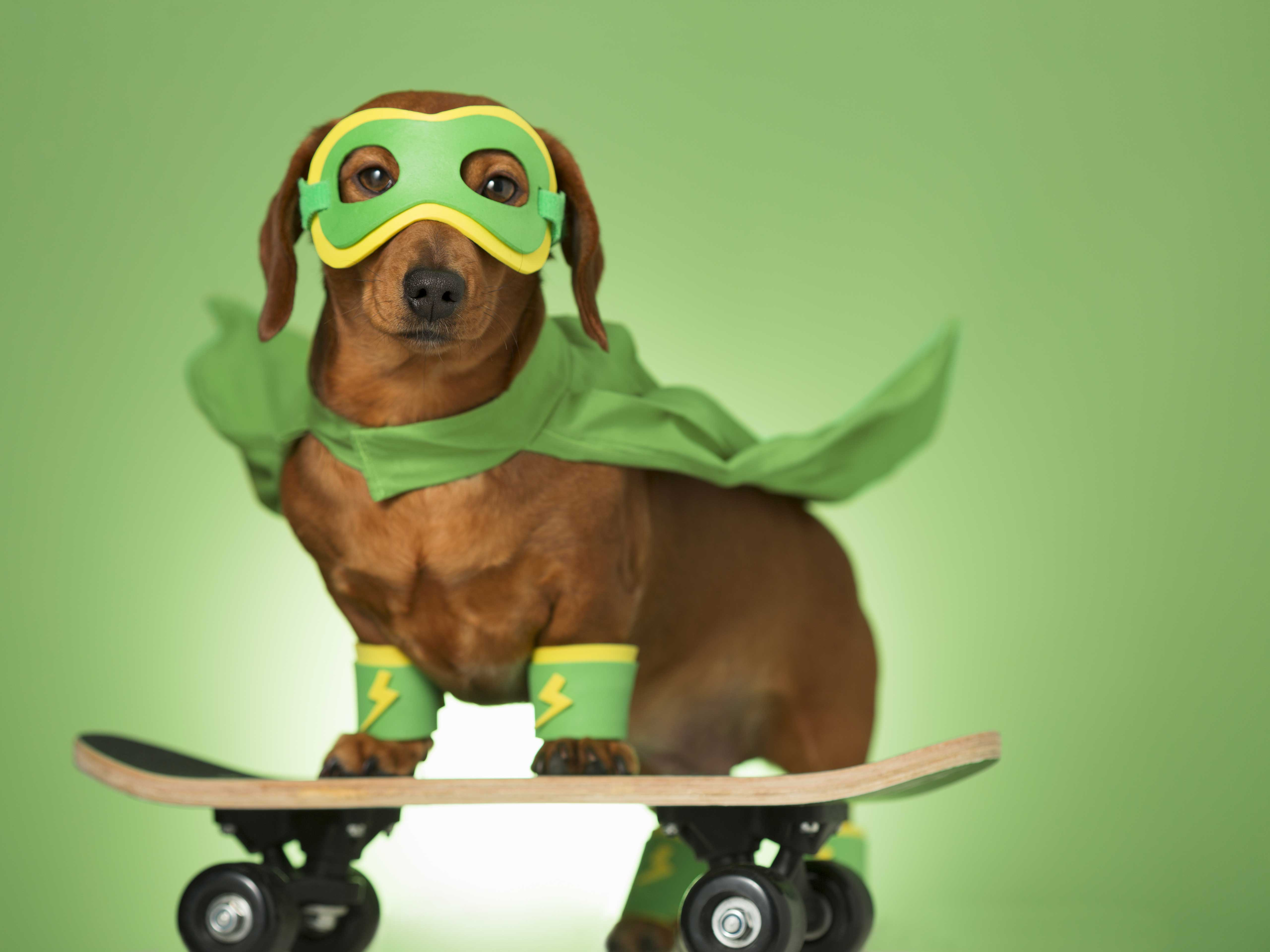 Dog with superhero mask on green screen